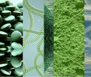 alga-spirulina-2