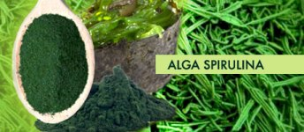 alga-spirulina-3